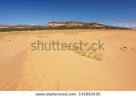 Coral Pink Sand Dunes,Utah - stock photo