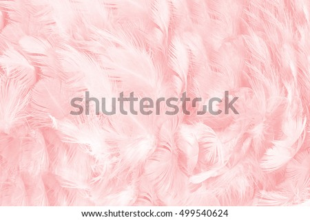 Coral Pink vintage color trends feather texture background,Interior modern image used for design living room,office and others