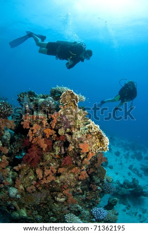 Coral pinnicle with soft coral and scuba divers