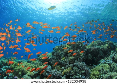 Coral Reef and Fish - stock photo