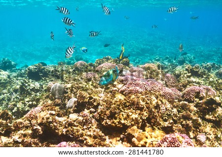 Coral reef and fish at Seychelles - stock photo