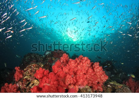 Coral reef and fish underwater in ocean - stock photo