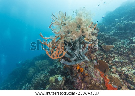 Coral reef and fishes with divers background at the colorful tropical sea