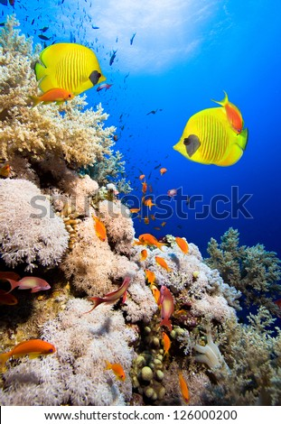 Coral reef and Masked Butterfly Fish - stock photo