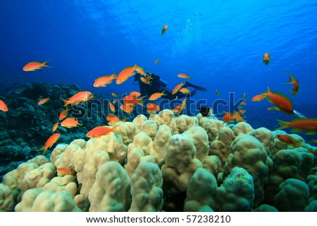 Coral Reef and Scuba Divers - stock photo