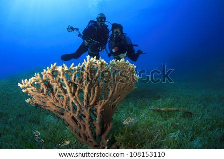 Coral Reef and Scuba Divers underwater