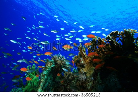 Coral Reef and Tropical Fish - stock photo