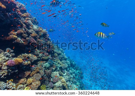 Coral reef and tropical fish in Red Sea - stock photo
