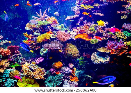 Coral Reef and Tropical Fish in Sunlight. Singapore aquarium - stock photo
