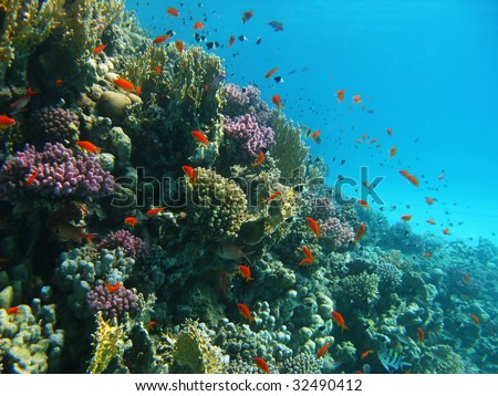Coral reef and tropical fishes - stock photo