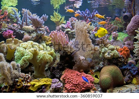 Coral reef atoll in a nice Sea Aquarium