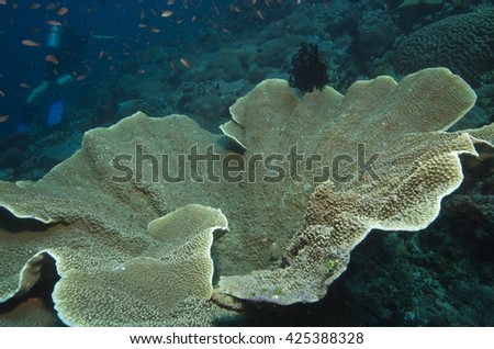 coral reef biodiversity in the Philippines