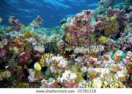 coral reef - bright colours - stock photo