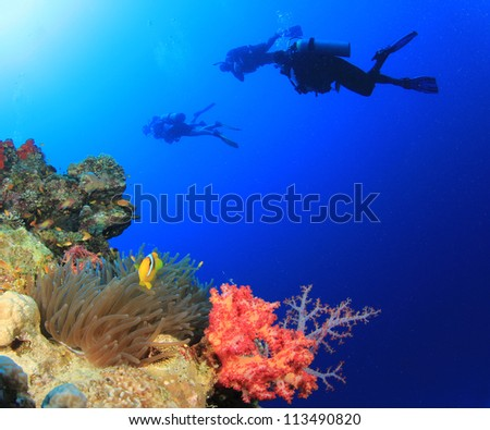 Coral Reef, Clownfish, Scuba Divers underwater - stock photo