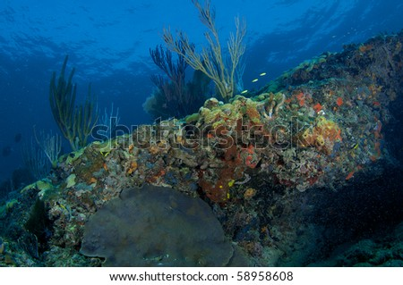 Coral Reef Composition, picture taken in Broward County, Florida.