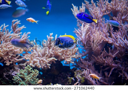coral reef fishes in the water - stock photo