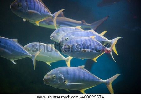 coral reef fishes in the water. beautiful underwater photos - stock photo