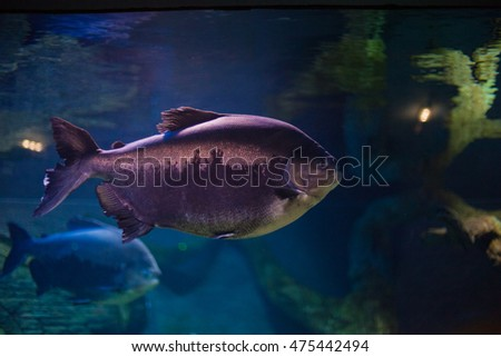 coral reef fishes in the water. beautiful underwater photos