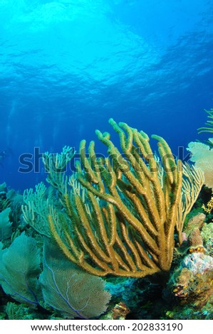 Coral Reef, Grand Cayman - stock photo