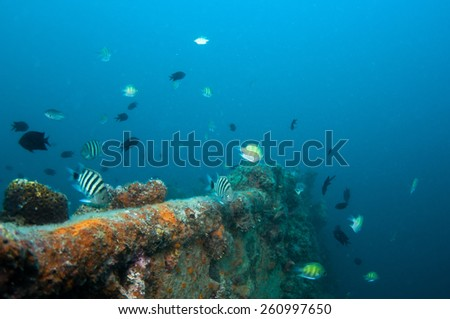 Coral reef growing on shipwreck, diving in Coron , Palawan, Philippines.