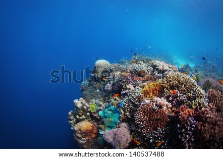 Coral reef in a tropical sea. Philippines, Balicasag island - stock photo