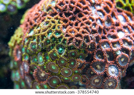 Coral Reef in aquarium - stock photo