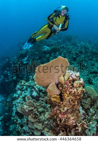 Coral Reef in Belize - stock photo