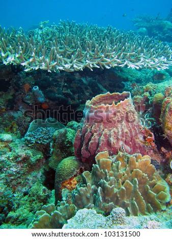 Coral reef in Lankayan island, Borneo. - stock photo
