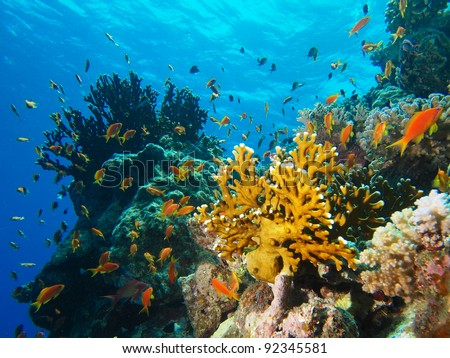 Coral reef in Red Sea - stock photo
