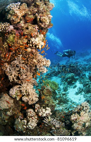 coral reef in red sea and scuba diver in background - stock photo
