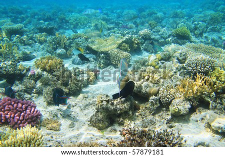 Coral Reef in Red Sea - Egypt