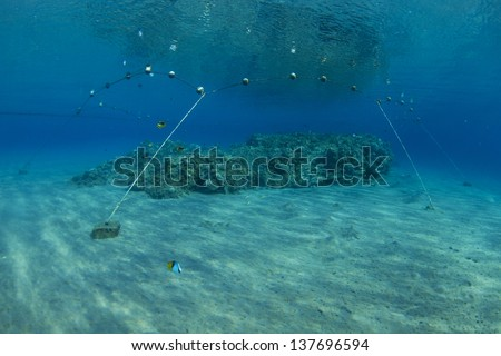 Coral reef in Red Sea, protected with buoys from snorkelers or boats that might pass on top of it and damage it. / Protection - stock photo