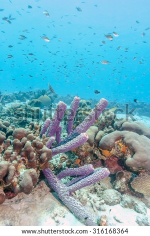 Coral reef in shallow waters off the coat of Bonaire - stock photo
