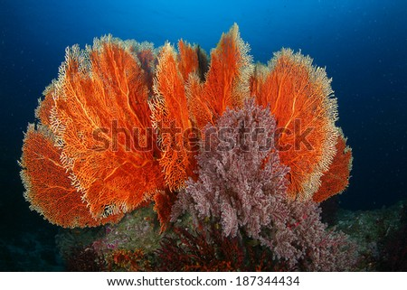 Coral Reef in Thailand - stock photo
