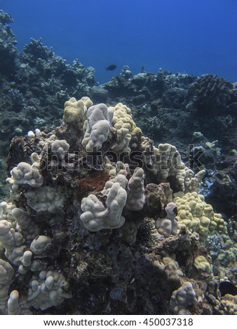 coral reef in the pacific ocean, against a blue background - stock photo