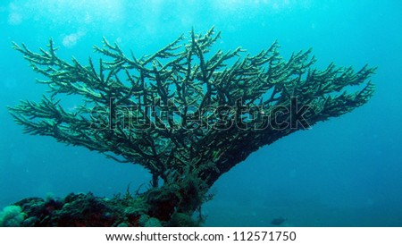 Coral Reef in the Red Sea of Egypt - stock photo