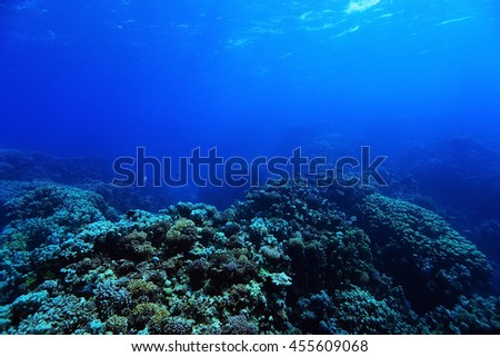 coral reef in the warm sea - stock photo