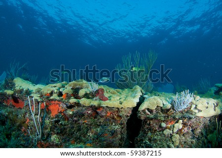 Coral Reef Ledge Composition, picture taken in Broward County, Florida.