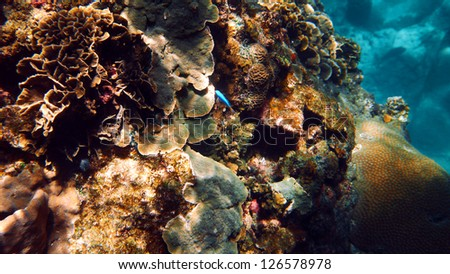 Coral Reef of Koh Tao, Suratthani, Thailand. - stock photo