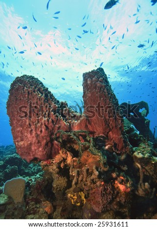 Coral reef on island of Dominica with large sponges