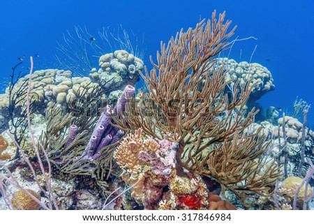 Coral reef pff the coast of Bonaire with fish - stock photo