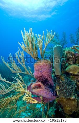 Coral reef scene on the reefs off the island of Roatan in Honduras - stock photo