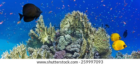 Coral reef scene - panorama