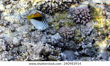 Coral Reef Scene with Tropical Fish in sunlight  - stock photo