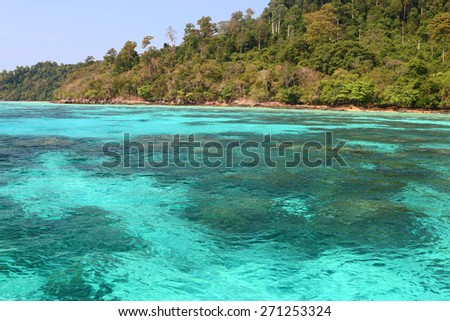 Coral reef under Aquamarine sea in Koh Rok Thailand