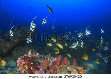 Coral reef underwater in ocean with fish - stock photo