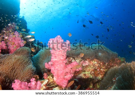 Coral reef underwater in ocean with fish