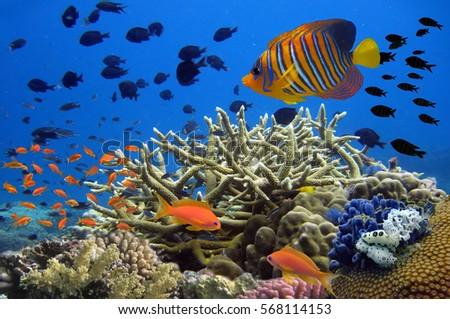 Coral reef underwater panorama with school of colorful tropical fish.