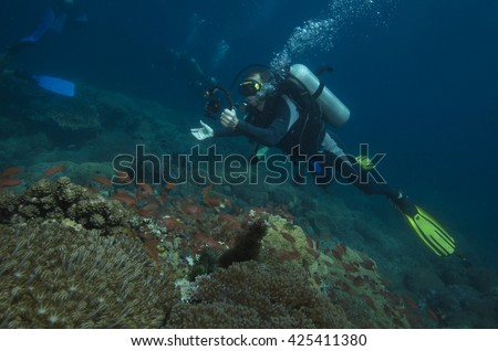 coral reef wall Philippines