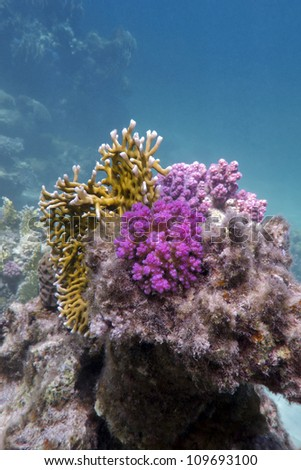 coral reef with fire and hard corals - stock photo